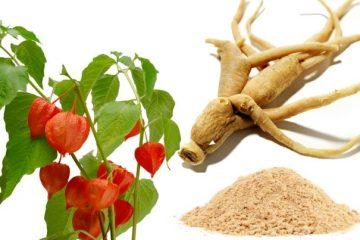 Ashwagandha-The-powerful-Herb-