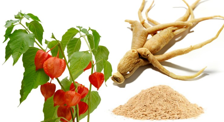 Know The Benefits of Age Old Ashwagandha - Herbs