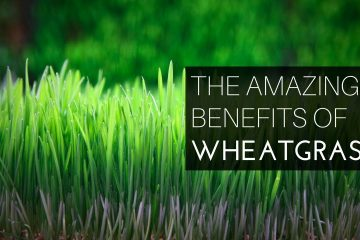 Wheatgrass: A Superfood You Should Daily Have
